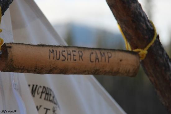 pvt-canada_lilys-road_musher