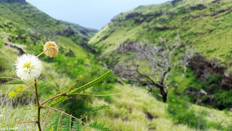 Maui_Blog voyage_Lily's road_Lahaina Pali Trail_2