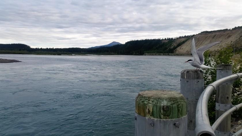 PVT Canada_Millenium Trail (1)