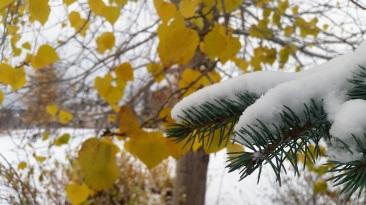 Quand l'automne et l'hiver cohabitent. ©Kelly Tabuteau