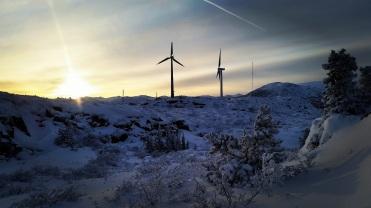 Le champ d'éoliennes de Whitehorse. ©Kelly Tabuteau