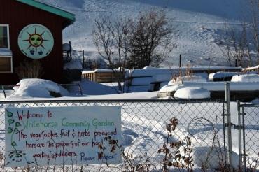 Le jardin communautaire de Whitehorse, au repos pendant l'hiver. ©Kelly Tabuteau