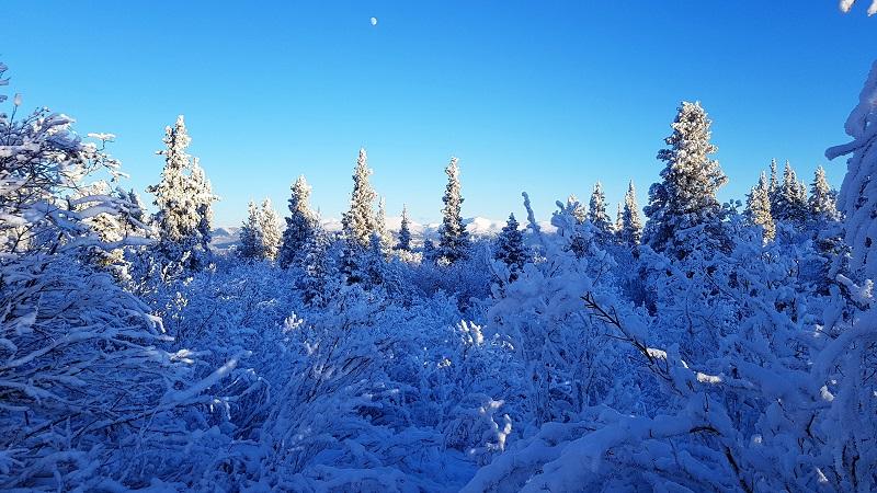 Paysages enneigés, Yukon, Canada